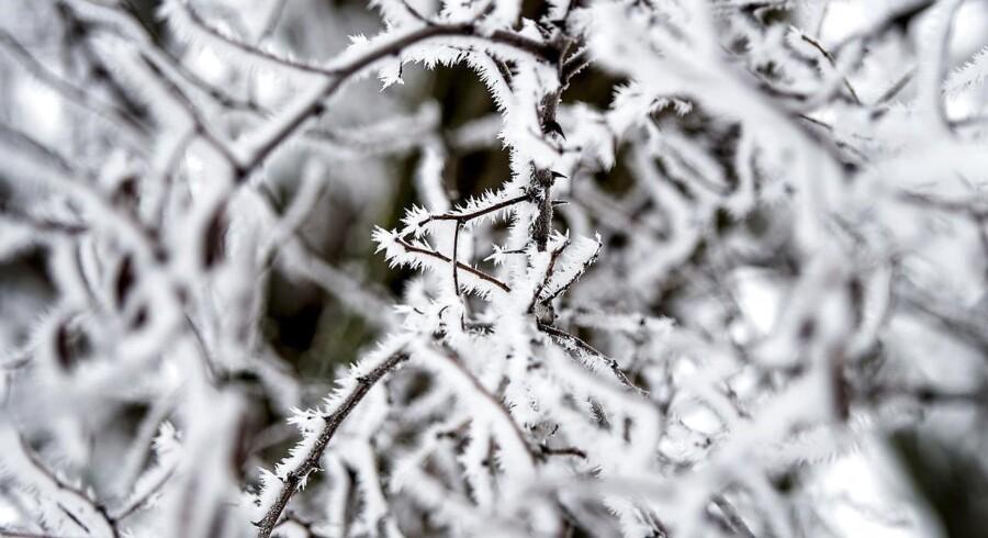 I nat kan temperaturen sige sig helt ned på minus 5 grader.