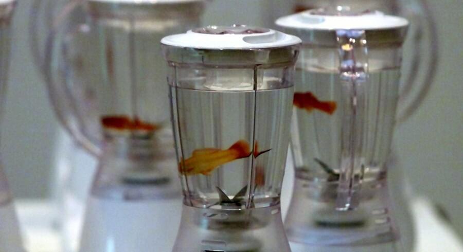 Marco Evaristti udstillede ti guldfisk i ti blendere, som var tilsluttet strømnettet, og som publikum havde mulighed for at starte og dermed lave indholdet til guldfiskesuppe.
