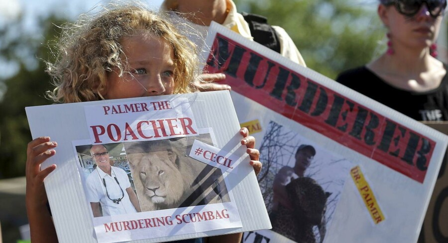 Den amerikanske tandlæge Walter Palmer skød ulovligt den afrikanske hanløve Cecil. Verden over raser folk over drabet på Cecil, der betegnes som et ikon, kongen af Hwange National Park, og desuden en del af et forskningsprojekt ved Oxford University.