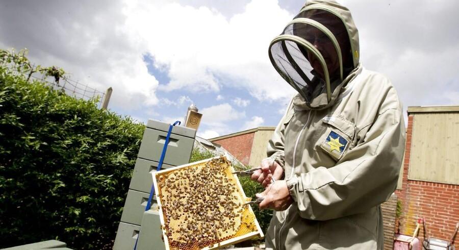 Døve kokke, blinde sælgere, autistiske programmører og hjemløse biavlere. Mange mennesker på kanten af arbejdsmarkedet har gennem de seneste år fået en ny chance som ansatte i socialøkonomiske virksomheder.