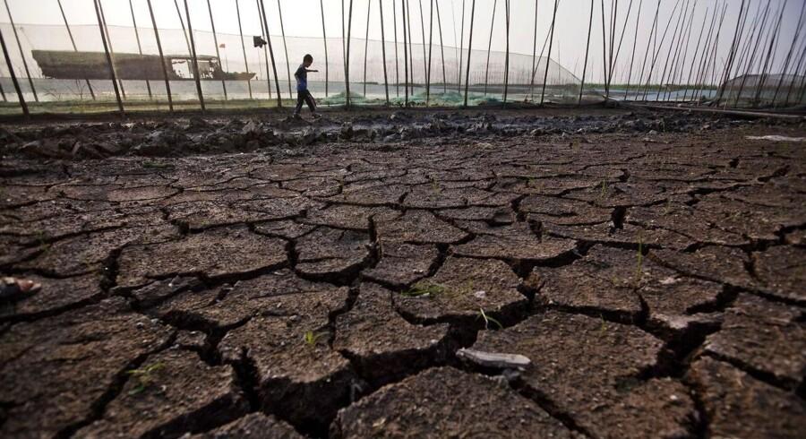 Tørken har for alvor ramt Kina og kan derved presse fødevarepriserne op.