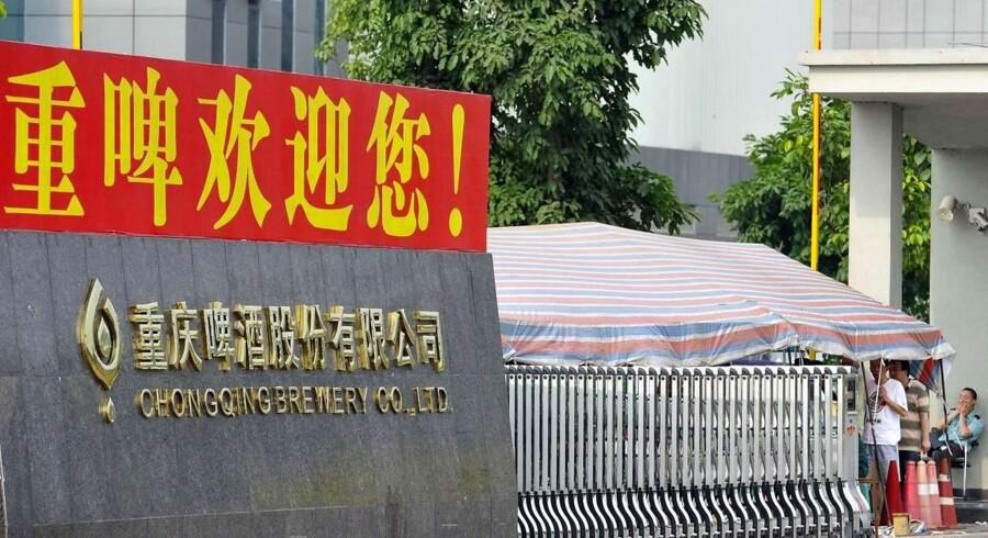 Chongqing Brewery har tabt 60 procent af sin aktieværdi på blot fire uger.