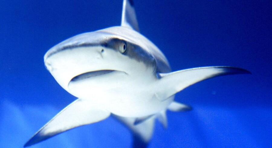 Mere end halvdelen af de uprovokerede hajangreb fandt sted i farvandene ud for de nordamerikanske kyster. Derudover er australierne dem, der er hårdest plaget med 14 angreb i 2012.