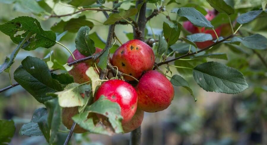 Hvis hindbær, æbler eller kartofler blev fremstillet af en kemisk fabrik, ville det være ulovligt at sælge dem.