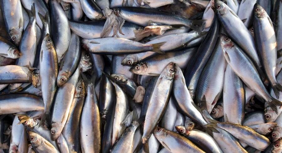 Den danske regering har landet en fiskeriaftale for Østersøen for 2015, som de danske fiskere ifølge fødevareminister Dan Jørgensen (S) kan være godt tilfredse med.