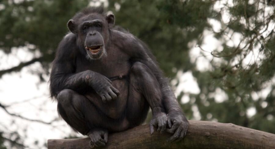 En kinesisk kvinde kom så tæt på en abe i en dyrepark, at den skubbede hende ud over en klippeside.