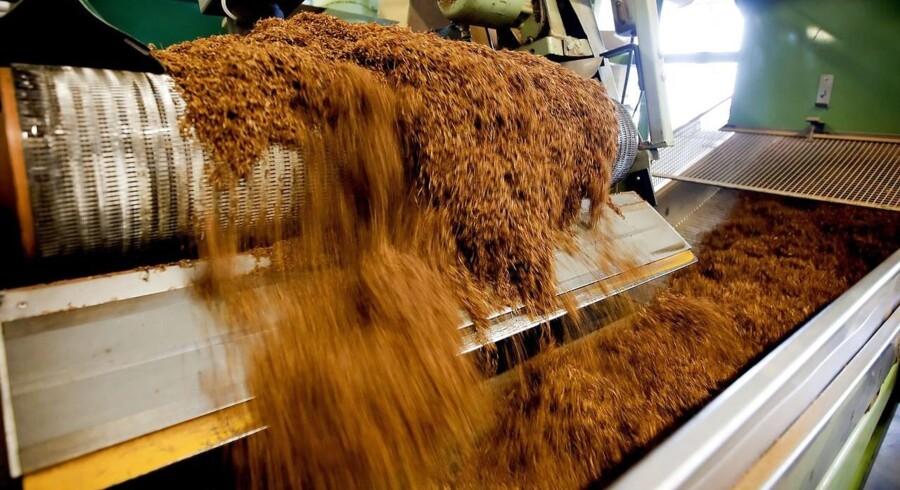 Scandinavian Tobacco Group Assens eksporterer til omkring 50 lande og har en årlig produktion på ca. 3.600 tons tobak.