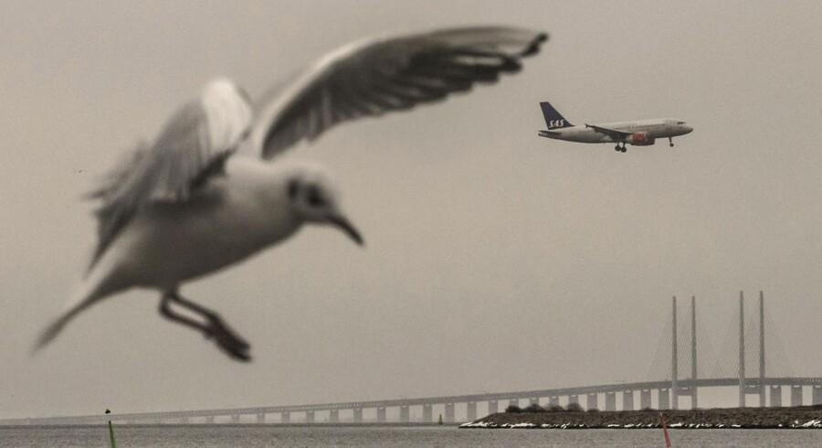 Støj fra både måger og lettende fly lyder i disse dage over Malmø.