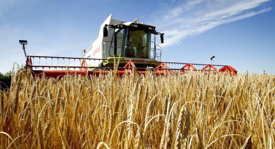 Det er første gang i lang tid, at kornhøsten i verden ikke har været påvirket af tørke, oversvømmelser eller andre katastrofale udfordringer.