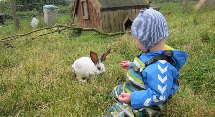 Hjortdal Dyrefarm i Fjerritslev har omkring 250 dyr fordelt på 45 arter. Deriblandt mus, dværghamstere, æsler, geder, får, heste – og selvfølgelig små søde kaniner.