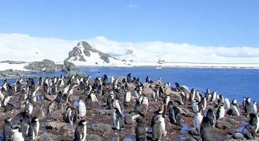 Føler i jer overvåget, små pingviner? Nu kan du også få pingvin-cam på Google Street View, som har tilføjet Antarktis, Brasilien og Irland og nu dækker dele af alle syv kontinenter.