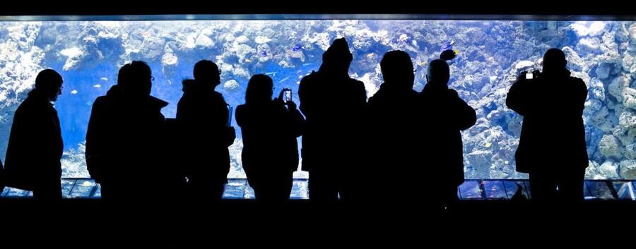 Den Blå Planet, Danmarks Akvarium i ny udgave, åbnede fredag kl. 10 for publikum.