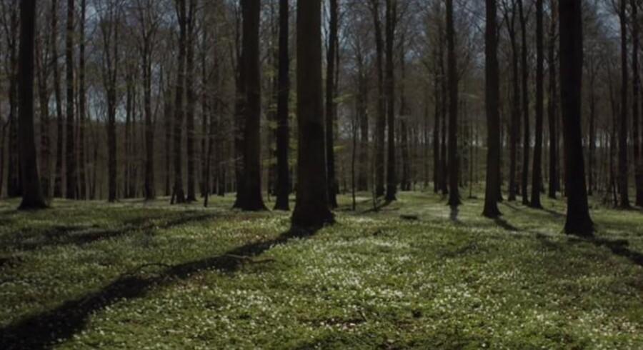 Grønne skove og strande med blide bølger - tilsat hjerteslagsrytmer - giver verdens måske mest afslappende film,