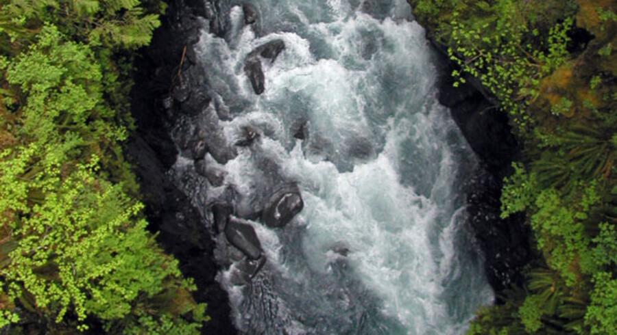 Dybt inde i regnskoven i Olympic National Park i staten Washington befinder man sig i det sted i samtlige stater i USA, hvor man er længst væk fra en vej - Hoh Valley.