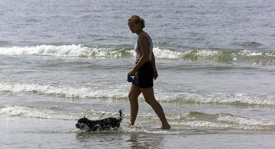 ARKIVFOTO. Ved Blokhus Strand afkøles en hund.