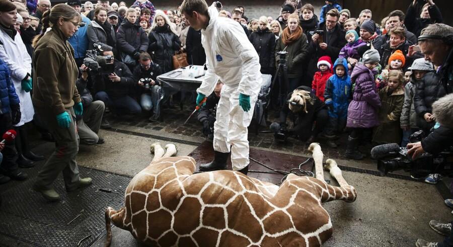 Aflivningen af giraffen Marius har skabt røre verden over.