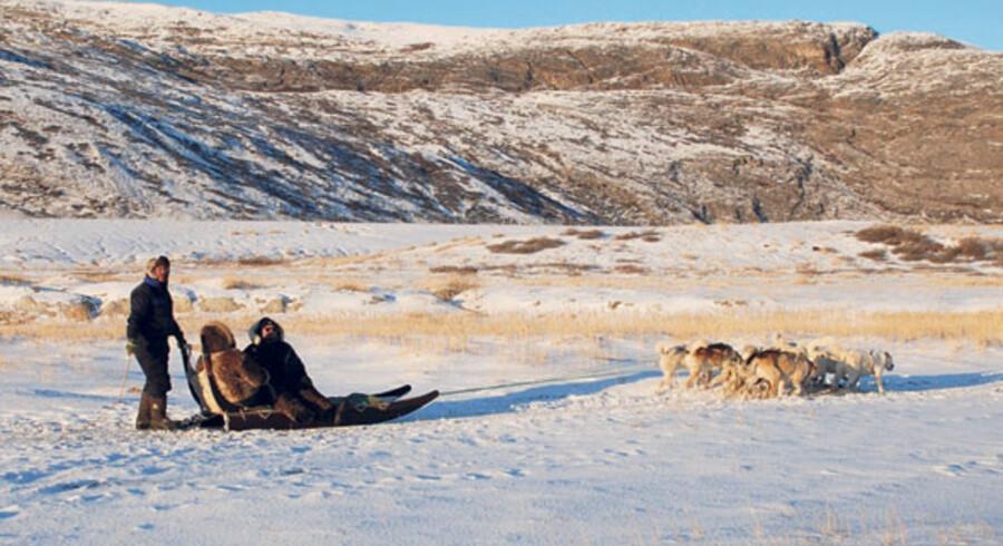 I denne del af verden er hundeslæde en vigtig del af tilværelsen, og noget af det, mange af de lokale lever af – at vise turisterne deres land fra slæden bag et spand ivrige hunde.