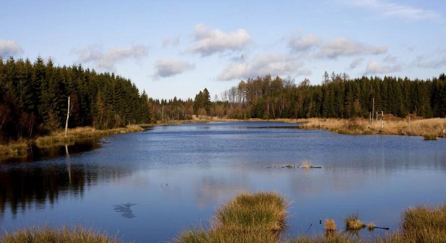 Grib Skov i Nordsjælland.