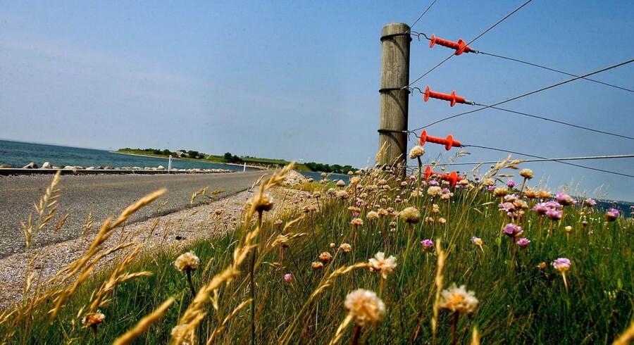Avernakø i det Sydfynske Øhav er blandt de 27 småøer, der ikke giver meget økonomisk mening at holde beboelig.