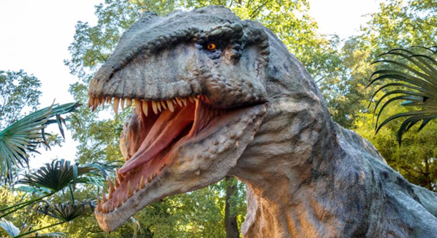 Sådan en farlig dinosaur kan du snart møde i den australske park.
