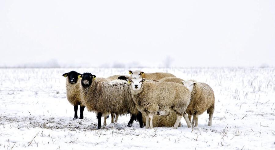 ARKIVFOTO: Antallet af sager om dyremishandling er på to år næsten firedoblet fra 136 til 503.