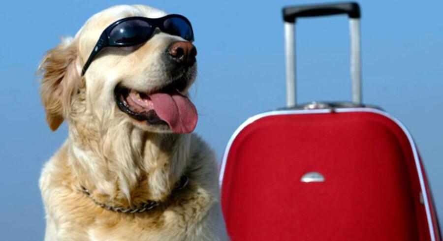Bare fordi ens ejere tager på ferie, kan man sagtens leve godt, mens de er væk.