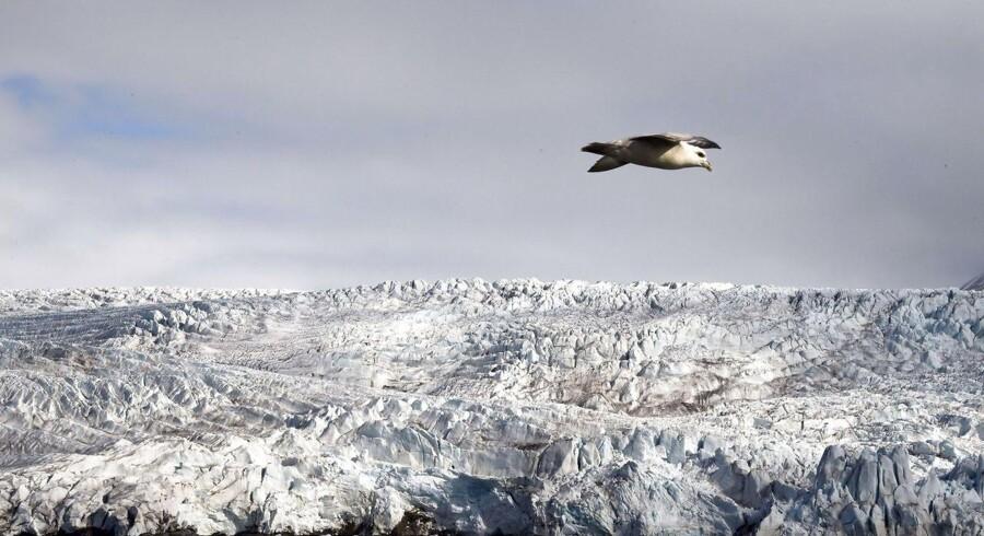 Svalbard er lige for tiden det hotteste sted i Norge. Bogstavelig talt.