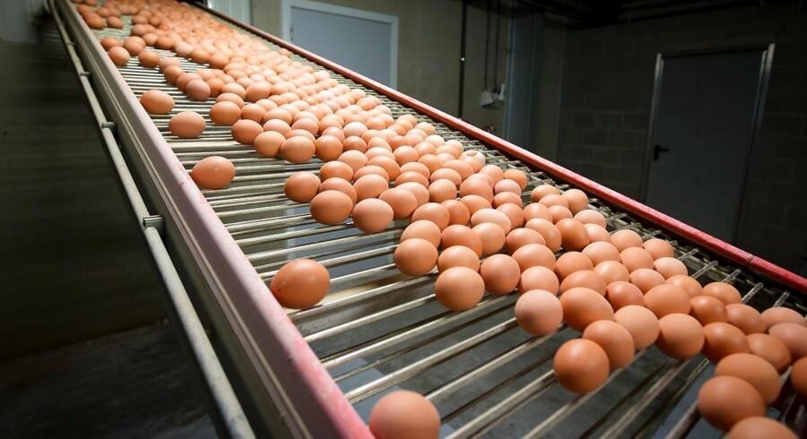 Det skal være slut med æggeskandaler som den, der ramte Europa og Danmark tidligere i år.