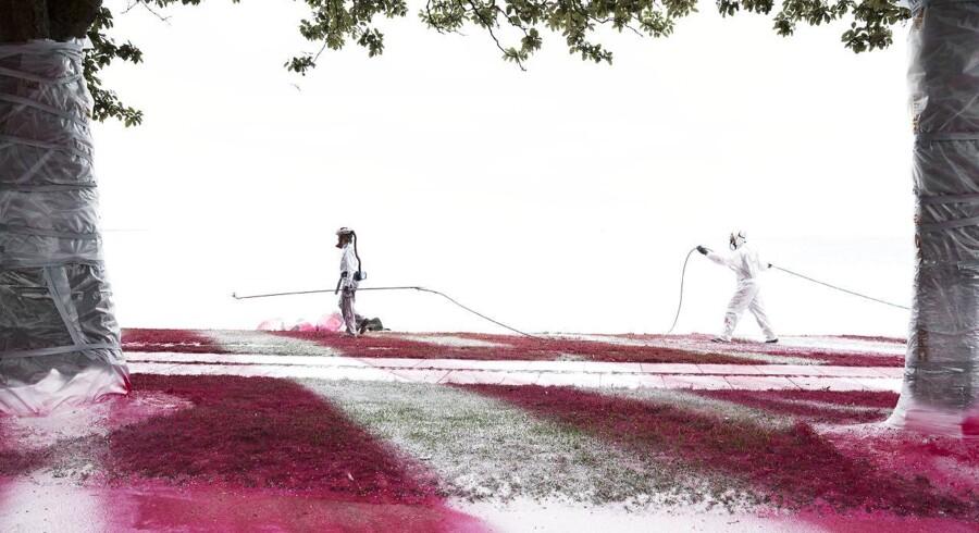 Trods protester er male arbejdet er igen gået igang mandag formiddag d. 29. maj 2017. Dog er der sat folk på til at holde opsyn og svare på spørgsmål vedr kunstværket. Området omkring Mindeparken ned mod Aarhus bugt bliver fortsat sprøjtemalet med rød farve mandag d. 29. maj 2017. Den røde maling, der farver naturen fungerer som et kunstværk af den tyske kunstner Katharine Grosse, og er en del af Kunstmuseet ARoS triennale THE GARDEN - End of Times, Beginning of Times. (Foto: Mikkel Berg Pedersen/Scanpix 2017)