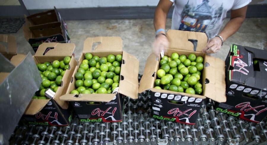 Mexico har været ramt af tung regn, som har givet lime-producenter et katastrofeår og fået priserne på citrusfrugten til at skyde i vejret.