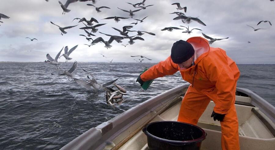 ARKIVFOTO. EU-Kommissionen foreslår et total stop for ålefiskeri i Østersøen.