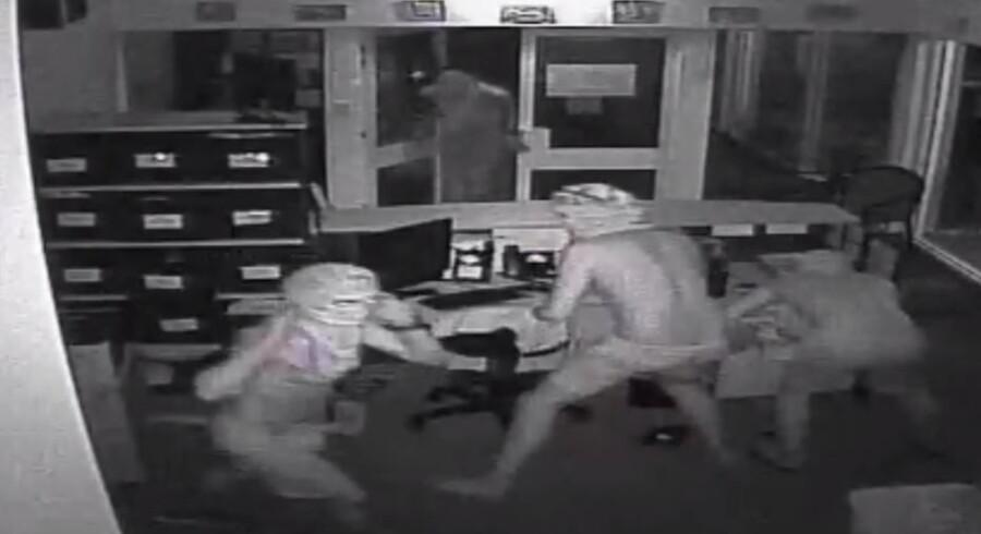 Mændene slipper her krokodillerne løs på skolen i Humpty Doo. Free/Handout, Darwin Police