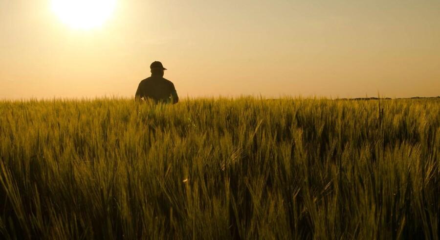 Priserne på vigtige landbrugsvarer som svinekød, smågrise og smør styrtdykker, og flere økonomer vurderer, at erhvervet er på vej ind i en ny lavkonjunktur. Foto: Iris.