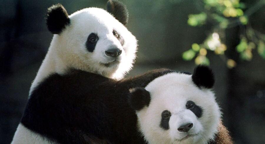 To pandaer til Københavns Zoo er det håndgribelige bevis på, at kineserne sætter pris på forholdet til Danmark.