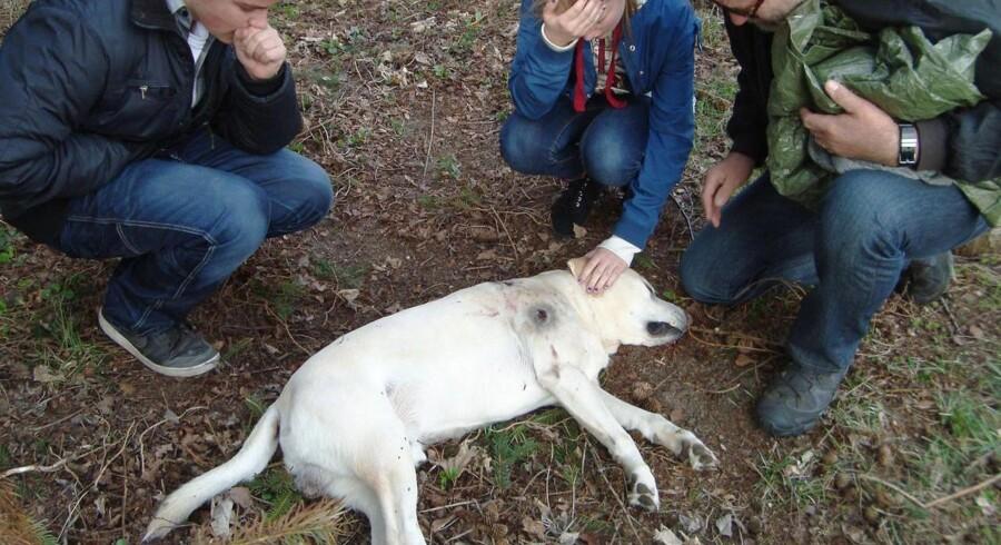 Hunden Balder blev skudt på grund af en gældende regel om strejfende hunde. Den vil fødevareminister Mette Gjerskov nu have lavet om på.