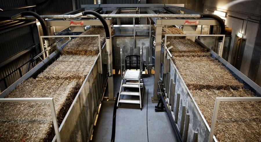 DONG's bioethanol afdeling i Kalundborg, Inbicon. Her køres halmen frem mod produktionen.