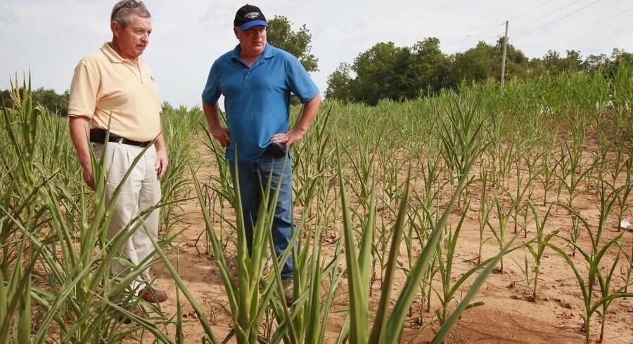 Illinois er en af de stater i USA, der er ramt af den værste tørke i et halvt århundrede, og længere vestpå er enorme områder uden tilstrækkelig nedbør. Det presser prisen på afgrøder som majs, hvede og soja voldsomt i vejret.