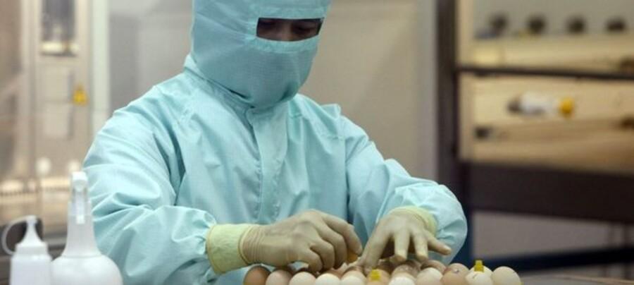 En videnskabsmand arbejder på at udvikle en H1N1-vaccine på Sillapakorn University ved Bangkok