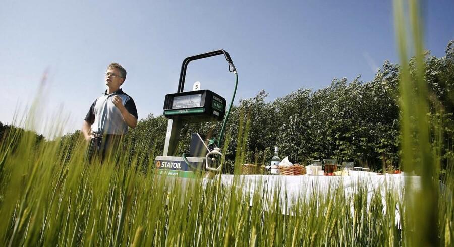 Grøn energi som biomasse sparer samfundet for milliarder. Her er Europas første bæredygtige marker til produktion af biomasse ved Det Biovidenskabelige Fakultet ved Københavns Universitet i Tåstrup