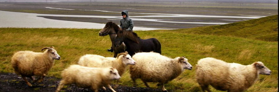 Island har formelt henvendt sig til EU-Kommissionen for at få finansiel hjælp.