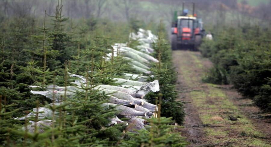 Efterspørgslen på juletræer stiger, mens udbuddet falder. Det giver avlerne mulighed for at sælge de knapt så kønne træer, der var usælgelige for få år siden.