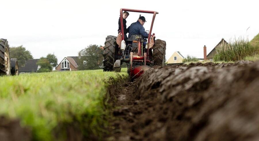 ARKIVFOTO: Konservative vil sammen med Venstre og Dansk Folkeparti lempe reglerne for landbruget.
