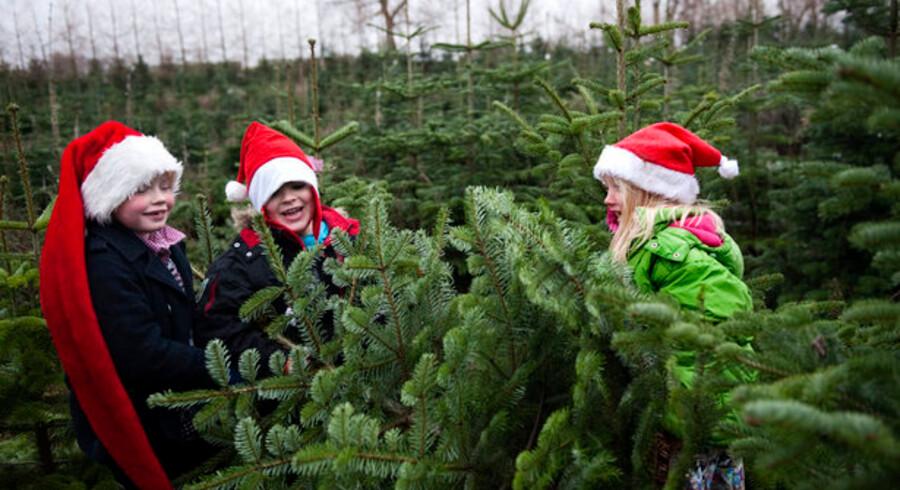 Romantisk ser det ud, og dejligt er det - lige indtil man kikker på prisskiltet, for juletræsdyrkerne har dannet et kartel for at sikre ens priser overalt, hævder Konkurrencestyrelsen. Foto: Jens Nørgaard Larsen, Scanpix