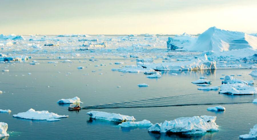 Kutter på vej i havn i isfjorden ved Ilulissat, Grønland.