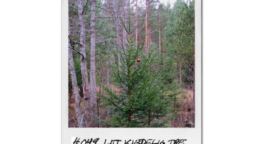 Det er rene ord for pengene, når de ægte, norske juletræer skal sælges. De er oven i købet blevet let pyntede, så man får fornemmelsen af, hvordan de vil tage sig ud hjemme i stuen. Foto: juletrefraskogen.no
