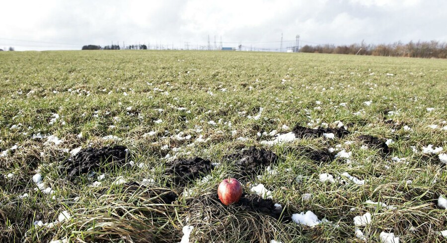 Apple er i gang med at investere 6,3 milliarder kroner i et nyt datacenter ved Foulum nær Viborg i Midtjylland. Centeret kommer til at ligge på en mark ved en stor transformatorstation og skal på længere sigt gøre Apple mindre afhængig af konkurrenterne. Arkivfoto: Henning Bagger