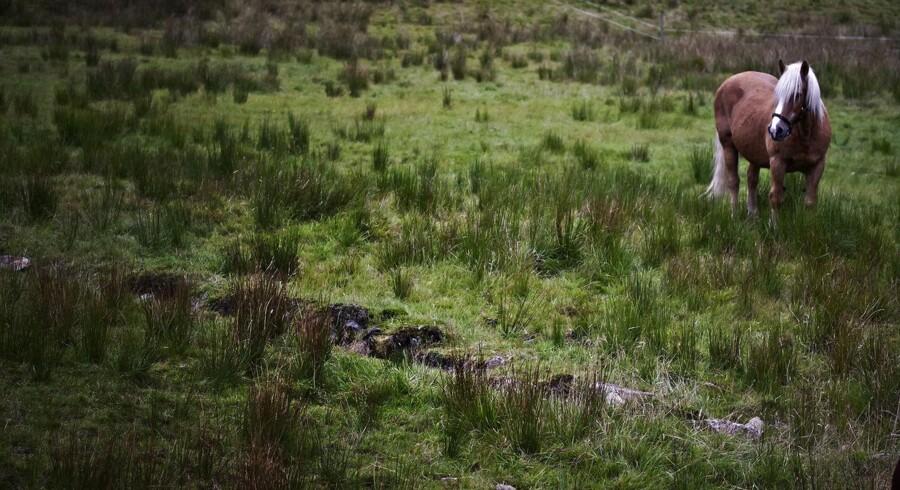 En tilfældig hest på en tilfældig mark. Arkivfoto.