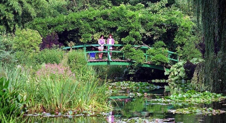 Monets have, som har været inspiration til impressionistens berømte åkande-malerier.