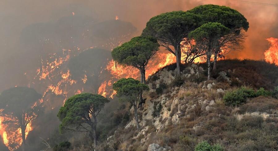 Heftige skovbrande på Sicilien sender tyk røg ind over fastlandet, og har resulteret i en veritabel masseevakuering fra de udsatte områder, med både myndigheder og civiles hjælp. En mand er arresteret under mistanke om ildpåsættelse.