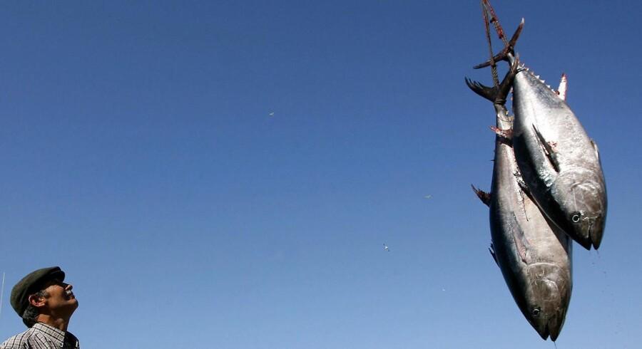 DTU Aqua, SLU Aqua og WWF Verdensnaturfonden har i samarbejde med en en række sportsfiskere mærket de 18 tun, der ligger i vægtklassen 130 til 300 kilo. Det er første gang nogensinde, at blåfinnede tun er blevet mærket i Danmark og Sverige.